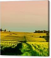 Iowa Cornfield Panorama Canvas Print