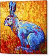 Jackrabbit Canvas Print