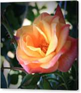 Jacob's Rose Canvas Print