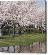 Japanese Cherry Blossom Trees Canvas Print