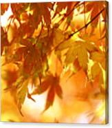 Japanese Maple In Fall Canvas Print