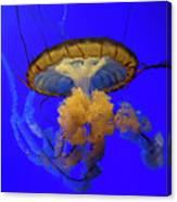 Jellyfish At California Academy Of Sciences In San Francisco, California Canvas Print