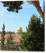 Jerusalem Trees Canvas Print