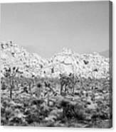 Joshua Tree Panoramic Canvas Print