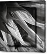 Just Shy In Black And White Canvas Print