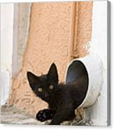 Kitten In A Pipe Canvas Print