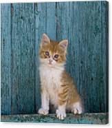 Kitten On A Greek Island Canvas Print