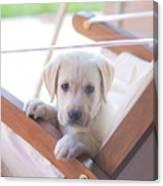 Labrador Canvas Print
