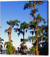Lake Martin Cypress Swamp Canvas Print