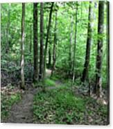 Lakeside Trail Winding Path - Yellowwood Lake Canvas Print