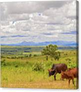 Landscape In Malawi Canvas Print