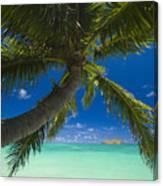 Lanikai Palm Tree Canvas Print