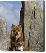 Lapinko�ra Dog And His Pup Canvas Print