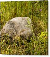 Large Rock And Purple Asters Canvas Print