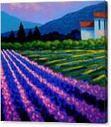Lavender Field France Canvas Print