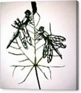Leafcarving Canvas Print