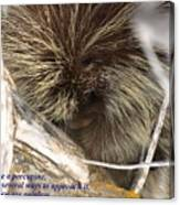 Life Is Like A Porcupine... Canvas Print