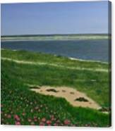 Sea Roses Canvas Print