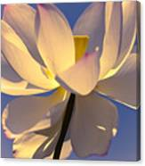 Lilies Of The Water V Canvas Print