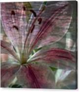 Lily Blossom Canvas Print