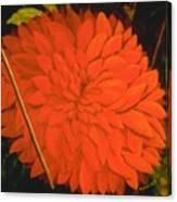 Linda's Red Dahlia Canvas Print
