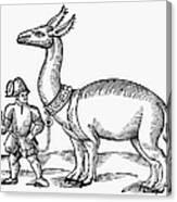 Llama, 1607 Canvas Print