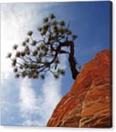 Lone Bonsai Tree In Zion Canvas Print