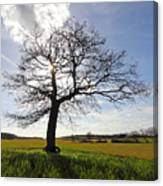 Lone Oak Tree In English Countryside Canvas Print