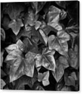 Lone Ranch Leaves 4930 Canvas Print