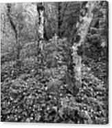 Lone Ranch Wood 4937 Canvas Print