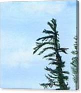 Lone Sentinel Canvas Print