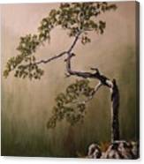 Lonesome Mountain Pine  Canvas Print