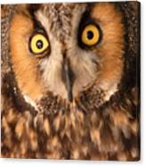 Long Eared Owl Canvas Print
