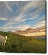 Long Mynd Hill Canvas Print