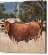 Longhorn Cow In The Paddock Canvas Print