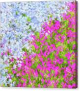 Pink And Purple Phlox Canvas Print