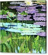 Lotus Reflections Canvas Print