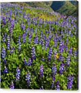 Lupine Hilltop Canvas Print