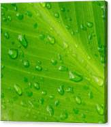 Macro Closeup Of Waterdrops On A Leaf Canvas Print