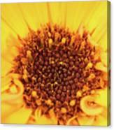 Macro Shot Of A Yellow Flower. Canvas Print