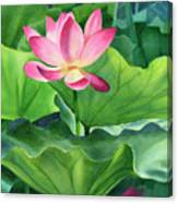 Magenta Lotus Blossom Canvas Print