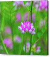 Magenta Wildflower Canvas Print