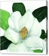 Magnolia II Canvas Print