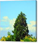 Majestic Evergreen Canvas Print