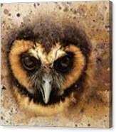 Malaysian Brown Wood Owl Canvas Print