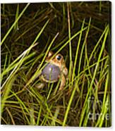 Male Toad Canvas Print