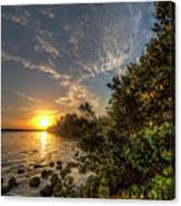 Mangrove Sunrise Canvas Print