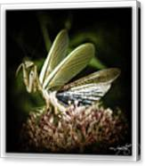Mantis 22 Canvas Print