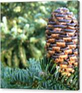 Masterful Construction - Spruce Cone Canvas Print