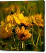 Maximilian Sunflowers Canvas Print
